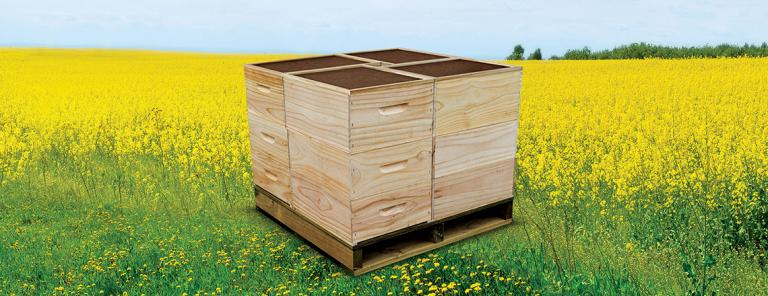 beehive boxes and woodware by tumu timbers